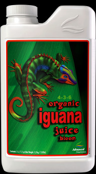 Iguana Juice Bloom