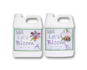 Let's Bloom A & B