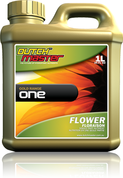 Dutch Master Gold Range ONE Flower