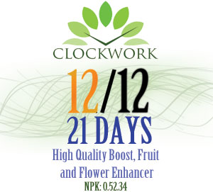 Clockwork 21 Days
